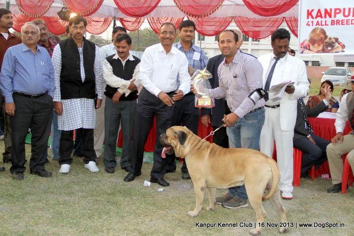 bis,bull mastiff,ex-108,sw-97,, Kanpur Dog Show 2013, DogSpot.in