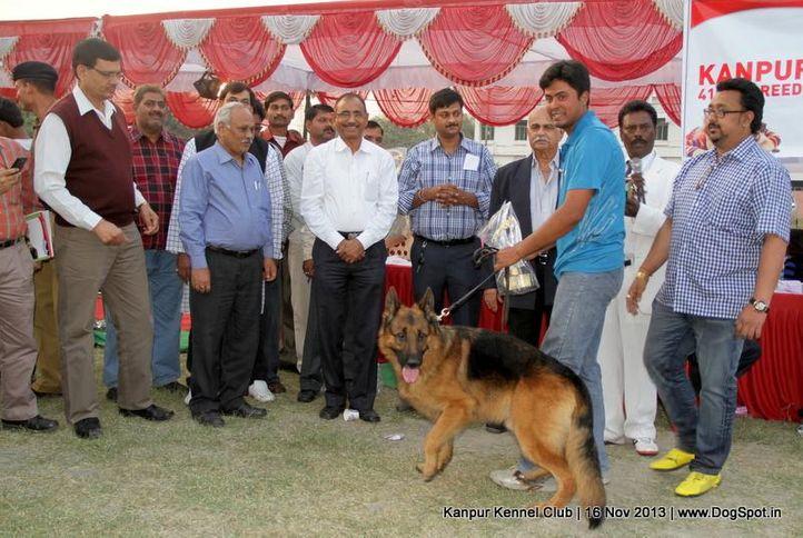 bis,ex-180,german shepherd,sw-97,, Kanpur Dog Show 2013, DogSpot.in