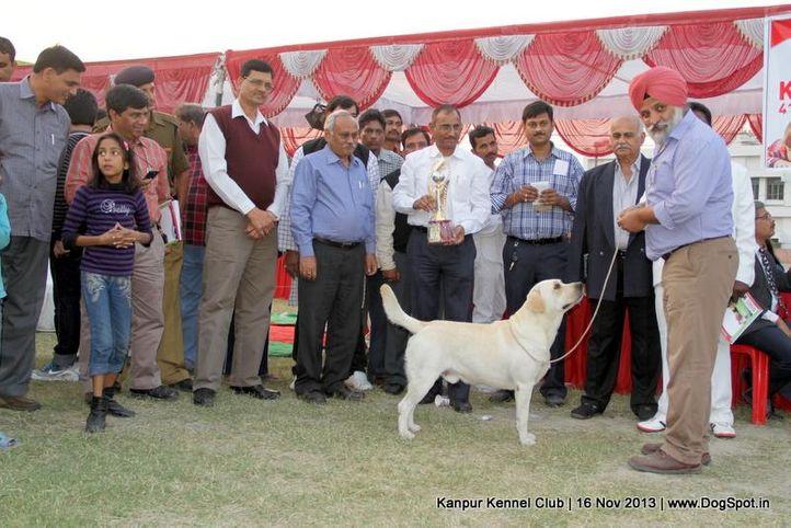 bis,ex-72,labrador retriever,sw-97,, Kanpur Dog Show 2013, DogSpot.in