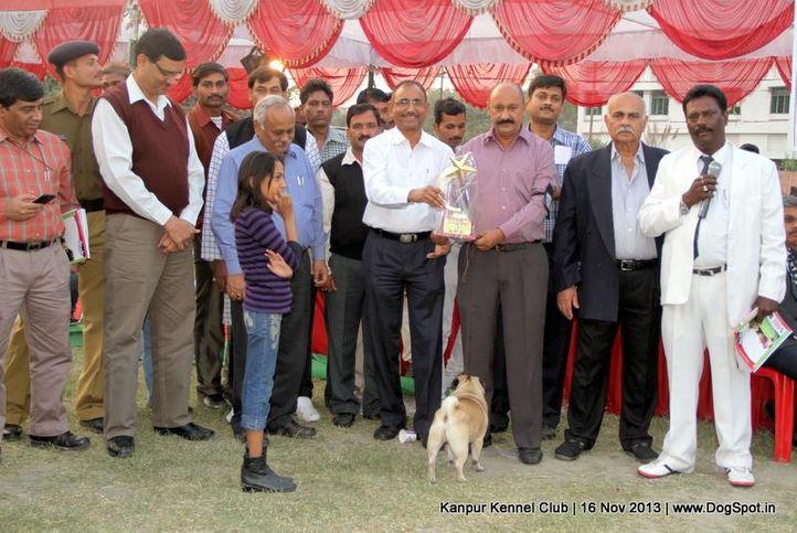bbi,bis,ex-12,pug,sw-97,, Kanpur Dog Show 2013, DogSpot.in