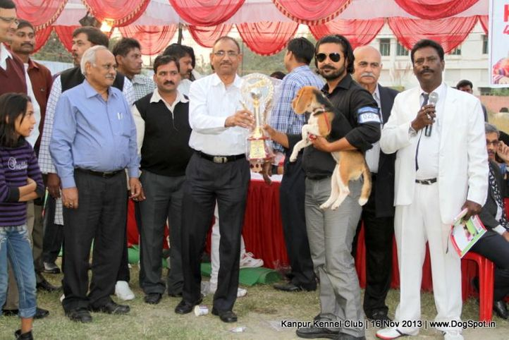 beagle,bis,ex-28,rbps,sw-97,, Kanpur Dog Show 2013, DogSpot.in