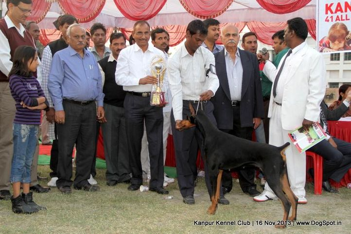 bis,bps,dobermann,ex-121,sw-97,, Kanpur Dog Show 2013, DogSpot.in