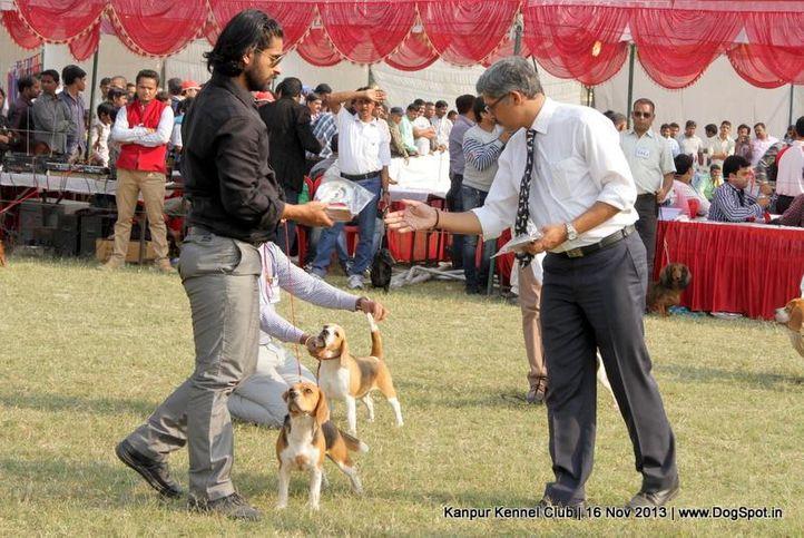 beagle,bob,ex-28,sw-97,, Kanpur Dog Show 2013, DogSpot.in