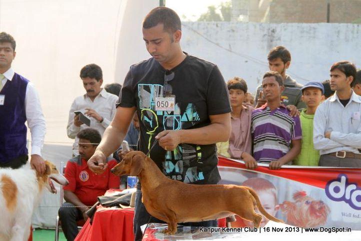 dachshund,ex-50,sw-97,, Kanpur Dog Show 2013, DogSpot.in