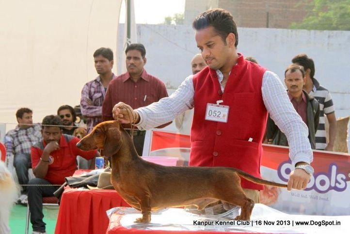 dachshund,ex-52,sw-97,, Kanpur Dog Show 2013, DogSpot.in