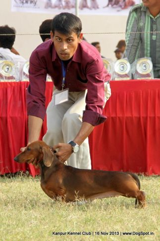 dachshund,sw-97,, Kanpur Dog Show 2013, DogSpot.in