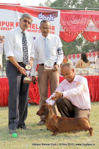 dachshund,ex-47,sw-97,, Kanpur Dog Show 2013, DogSpot.in