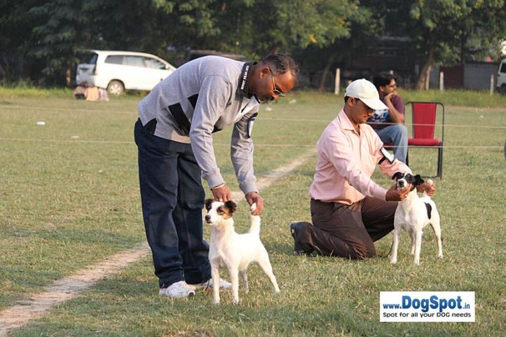 sw-7,terrier,, Kanpur Dog Show, DogSpot.in