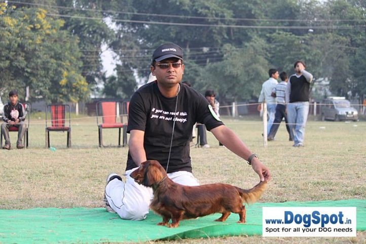 dachshund,sw-7,, Kanpur Dog Show, DogSpot.in