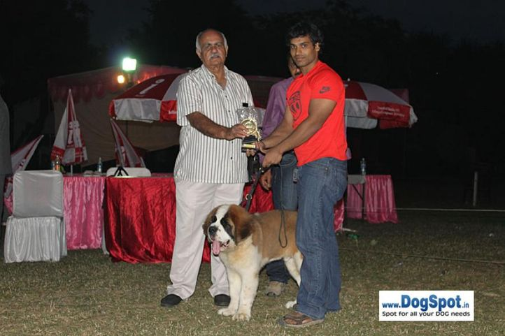 lineup,stbernard,sw-7,, Kanpur Dog Show, DogSpot.in