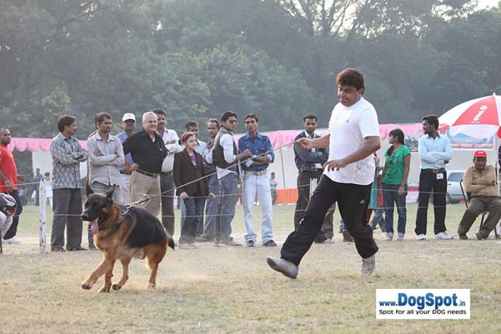 gsd,sw-7,, Kanpur Dog Show, DogSpot.in