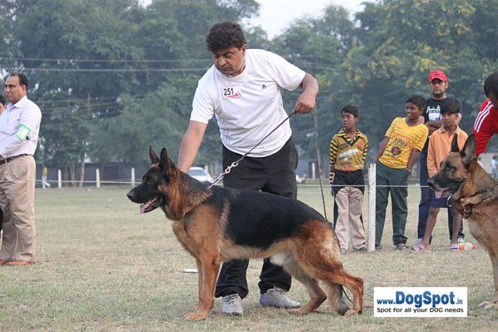 ex-251,gsd,sw-7,, HATSCHVOM ST-MICHAELS BERG, German Shepherd Dog, DogSpot.in