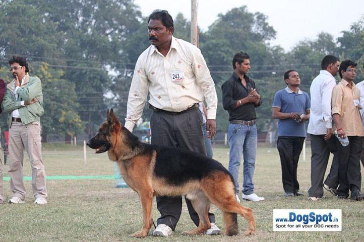 ex-243,gsd,sw-7,, ZARNO VON DER NORISWAND, German Shepherd Dog, DogSpot.in