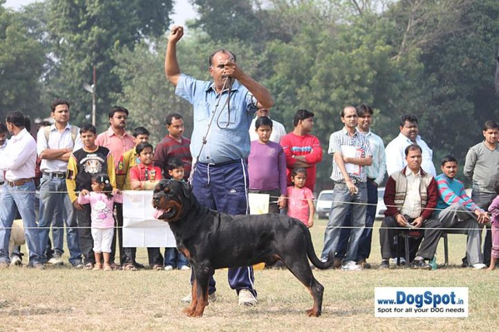 rottweiler,sw-7,, Kanpur Dog Show, DogSpot.in