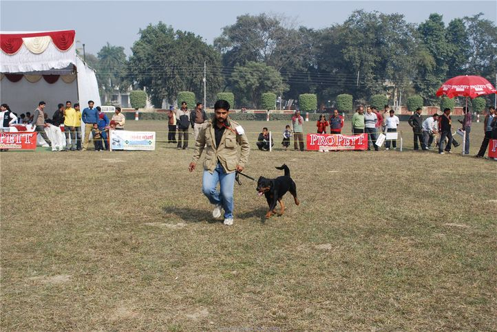 rottweiler,, Kanpur January 2009, DogSpot.in
