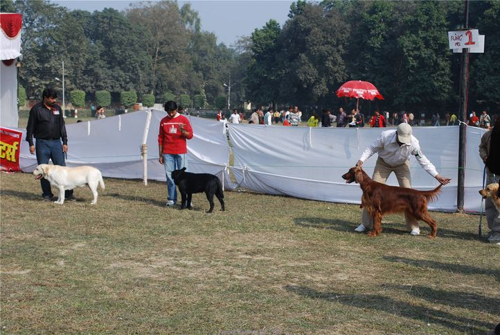 gundog group,, Kanpur January 2009, DogSpot.in