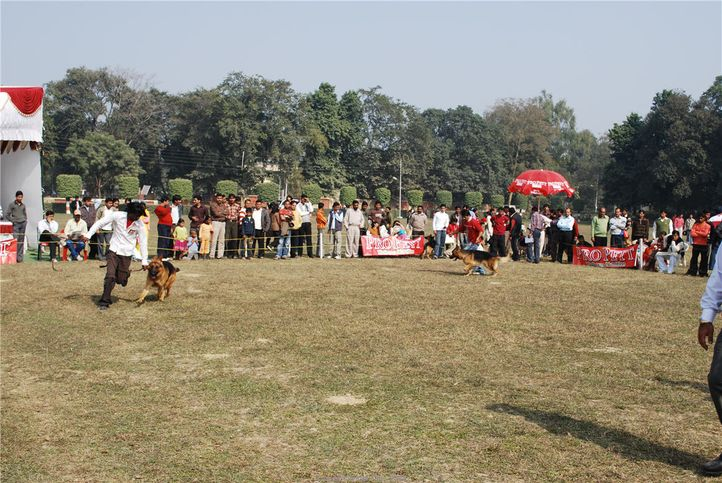 GSD,, Kanpur January 2009, DogSpot.in