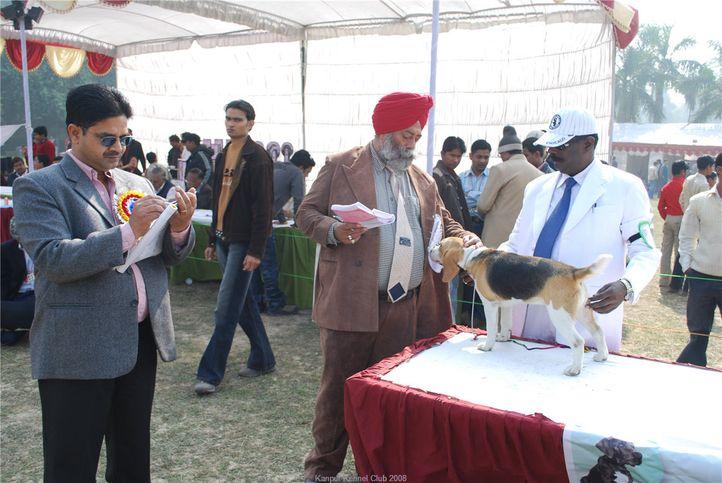 beagle,, Kanpur January 2009, DogSpot.in