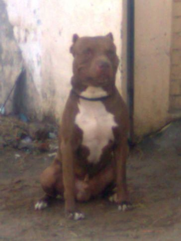 kataria kennels, Kataria Kennels, DogSpot.in