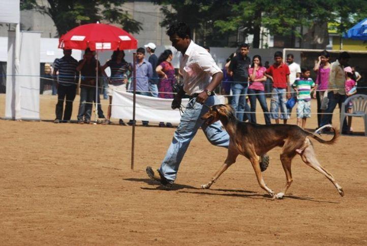 kci show 2011 mumbai, KCI SHOW 2011 MUMBAI, DogSpot.in
