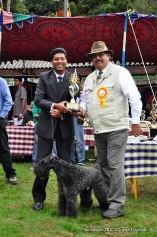 bis,kerry blue,lineup,, Kerry Blue Terrier taking Line up, DogSpot.in