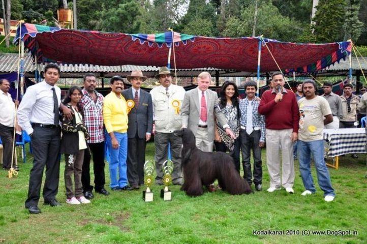 afghan hound,bis,lineup,, Kodaikanal Dog Show 2010, DogSpot.in