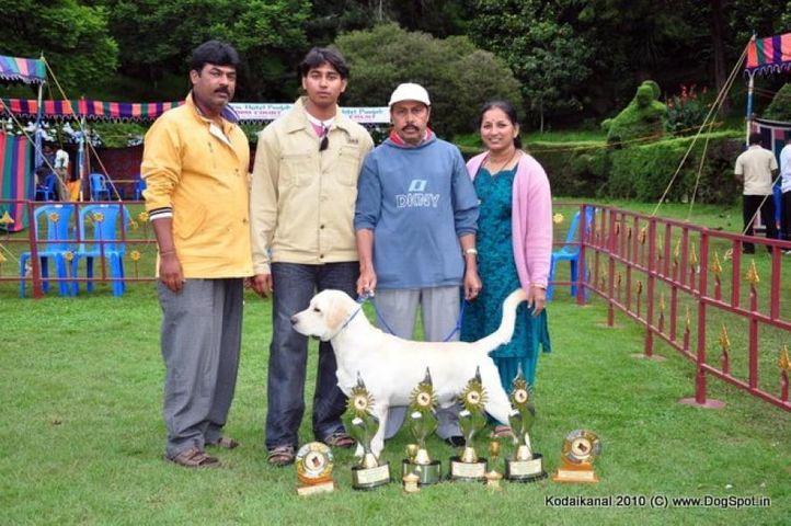 bis,labrador,lineup,, Kodaikanal Dog Show 2010, DogSpot.in
