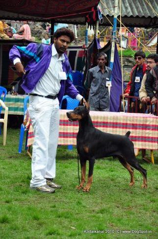 doberman,, Kodaikanal Dog Show 2010, DogSpot.in