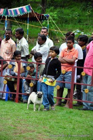 child handler,, Kodaikanal Dog Show 2010, DogSpot.in
