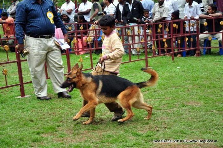 child handler, Kodaikanal Dog Show 2010, DogSpot.in