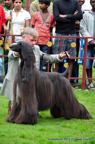 afghan hound,, Kodaikanal Dog Show 2010, DogSpot.in