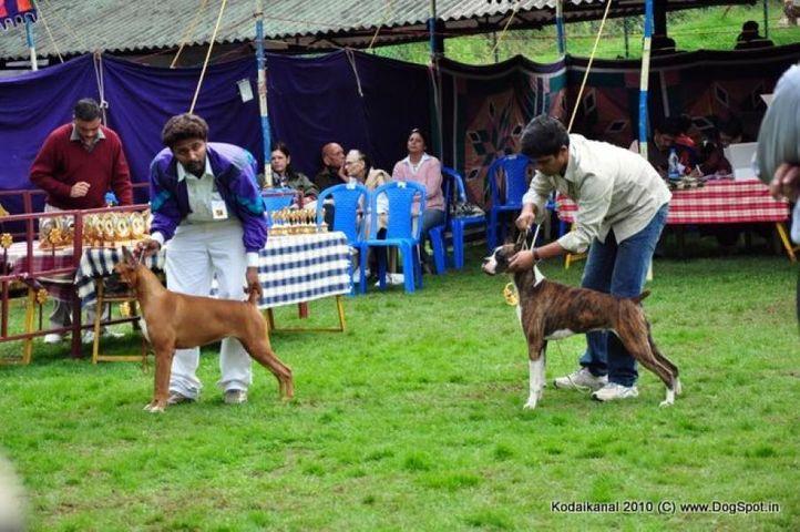 boxer,, Kodaikanal Dog Show 2010, DogSpot.in
