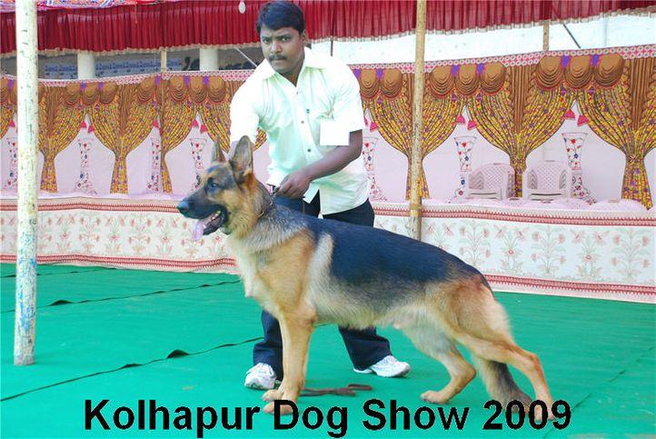 alsatian,gsd,, Kolhapur 2009, DogSpot.in