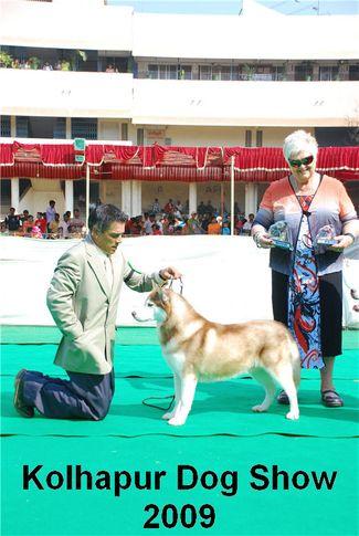 huskie,siberian huskie,, Kolhapur 2009, DogSpot.in