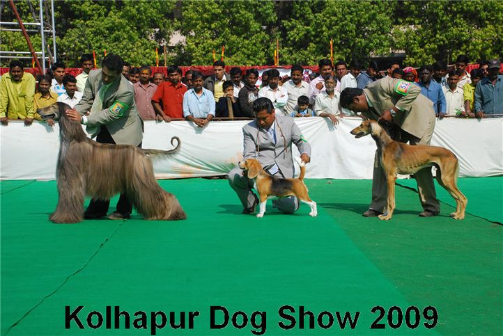 group judging,, Kolhapur 2009, DogSpot.in