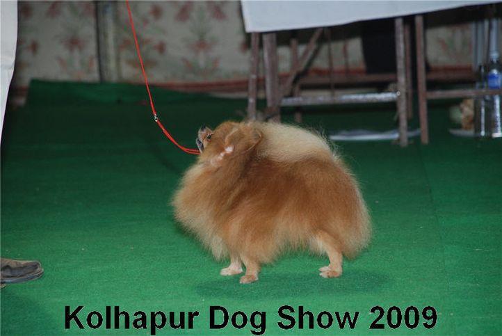 pom,, Kolhapur 2009, DogSpot.in