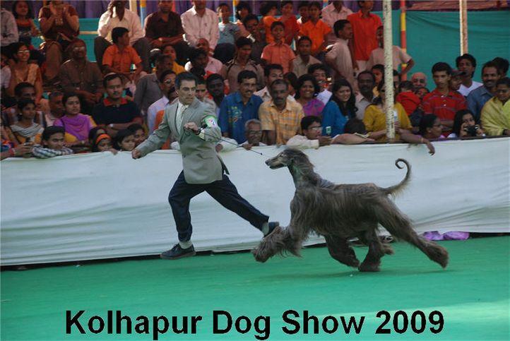 Afghan,, Kolhapur 2009, DogSpot.in