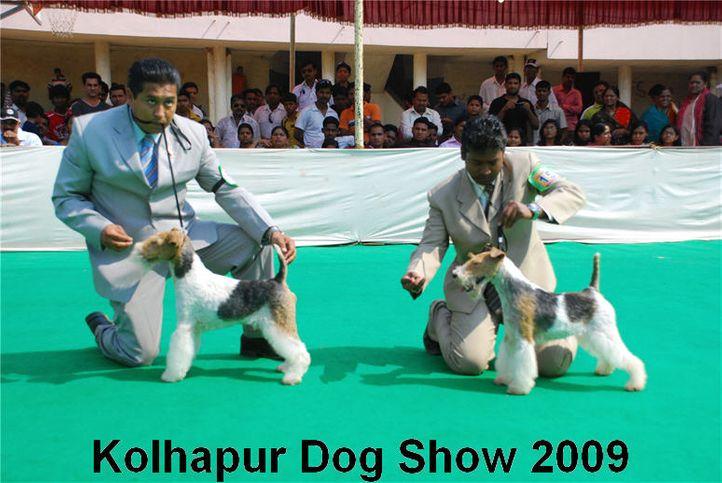 Terrier,, Kolhapur 2009, DogSpot.in