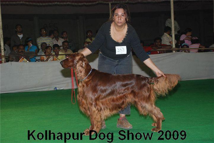 irish setter,setter,, Kolhapur 2009, DogSpot.in
