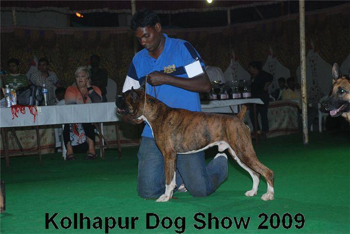 boxer,, Kolhapur 2009, DogSpot.in
