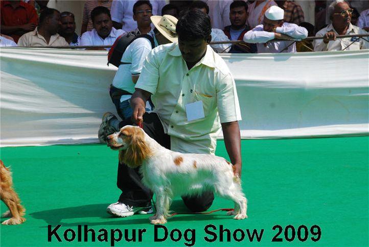 cocker,, Kolhapur 2009, DogSpot.in