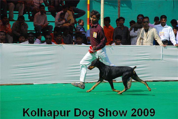doberman,, Kolhapur 2009, DogSpot.in