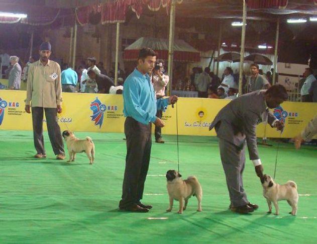 kolhapur show, kolhapur show, DogSpot.in