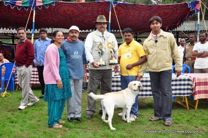 bis,labrador,lineup,, Labrador Kodai Show Lineup, DogSpot.in