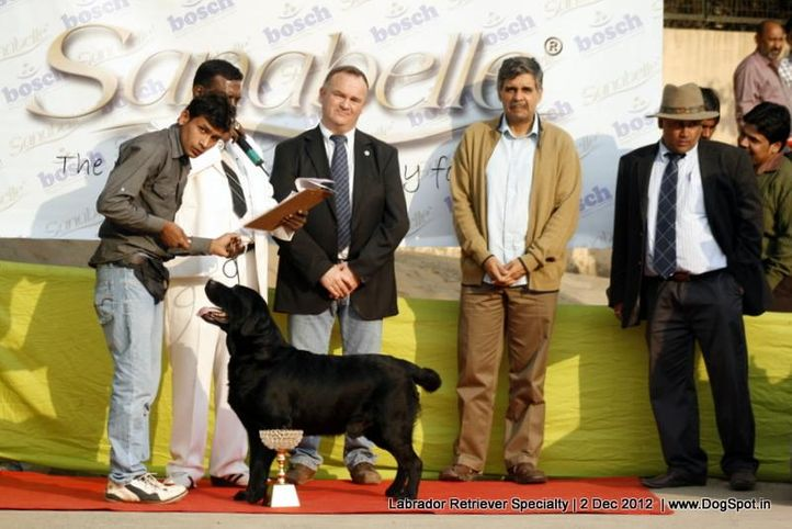 labrador retriever,,  Labrador Retriever Specialty Dog Show New Delhi, DogSpot.in