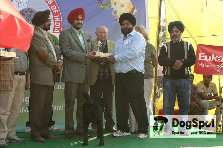 labrador,, Labrador Specialty- Ludhiana 2008, DogSpot.in