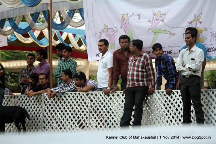 people,sw-127,, Labrador Specialty Show Jabalpur -2014, DogSpot.in