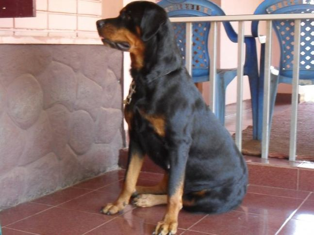 lara, Lara, DogSpot.in