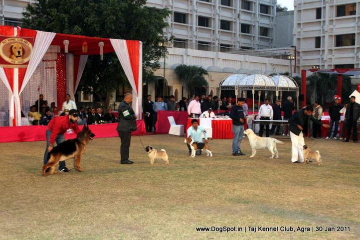 lineup,sw-31,, Lineup, DogSpot.in