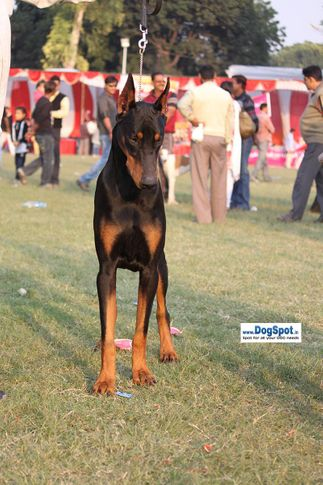 sw-8, dob,, Lucknow Dog Show 2010, DogSpot.in